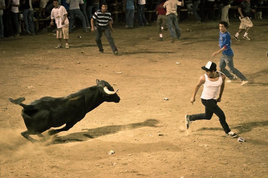 Bull charging kid