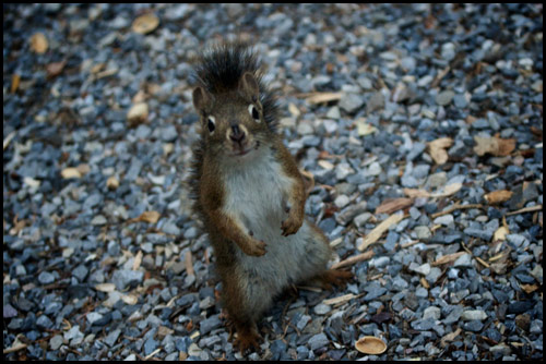 Smirking Squirrel